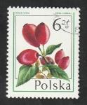 Stamps : Europe : Poland :  2322 - Fruto, rosa canina