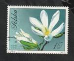 Stamps : Europe : Poland :  1983 - Flor, Magnolia kobus Dc