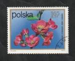 Stamps : Europe : Poland :  2061 - Flor, Chaenomeles lagenaria