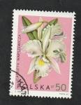 Stamps : Europe : Poland :  1466 - Orquídea
