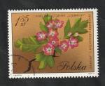 Stamps : Europe : Poland :  1984 - Flor, Crataegus Oxyacantha L. Punicea