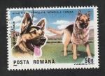 Stamps : Europe : Romania :  3869 - Pastor alemán, perro de raza