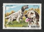 Stamps : Europe : Romania :  3870 - Seter inglés, perro de raza
