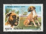 Stamps : Europe : Romania :  3871 - Boxer, perro de raza