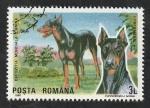 Stamps : Europe : Romania :  3873 - Doberman, perro de raza
