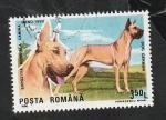 Stamps : Europe : Romania :  3874 - Dogo alemán. perro de raza