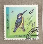 Stamps Belarus -  Pájaro alcedo atthis