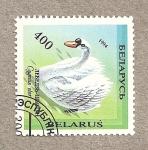 Stamps Europe - Belarus -  Cisne, Cygnus olor