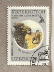 Stamps Asia - Uzbekistan -  Camello