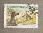 Stamps Asia - Uzbekistan -  Ovis ammon