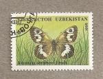 Stamps Asia - Uzbekistan -  Mariposa Karanasa abramovi