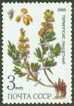 Stamps : Europe : Russia :  Plantas medicinales protegidas en Siberia, Thermopsis lanceolata