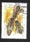 Stamps : Europe : Russia :  Apicultura, reina y trabajadores (Apis mellifica) en Honeycomb