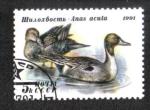 Stamps : Europe : Russia :  Patos, Scaup Mayor (Aythya marila)