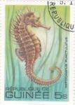 Stamps Africa - Guinea -  CABALLITO DE MAR