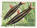 de America - Nicaragua -  PECES- ANOSTOTOMUS
