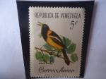 de America - Venezuela -  Turpial (Icterus Icterus)