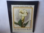 de America - Venezuela -  Symbolanthus  Vasculosus (Griseb) - Gilg.