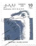 de Africa - Marruecos -  aves