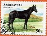 Stamps Asia - Azerbaijan -  Caballo Qurahair