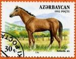 Stamps Asia - Azerbaijan -  Caballo Kabarda