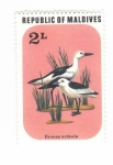 Stamps : Asia : Maldives :  Aves. Dronas ardeola