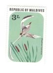 Stamps : Asia : Maldives :  Aves. Phaeton lepturus