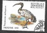 Sellos de Africa - Madagascar -  1032 - Ibis Sagrado