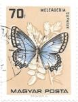 Sellos de Europa - Hungría -  insectos