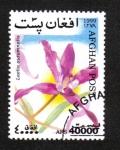 Stamps Afghanistan -  Orquídeas