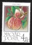 Sellos de Europa - Hungría -  Frutas, Albaricoques