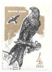 Sellos del Mundo : Europa : Rusia :  aves
