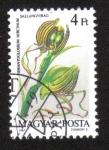 Stamps Hungary -  Orquídeas