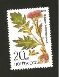 Stamps Europe - Russia -  INTERCAMBIO