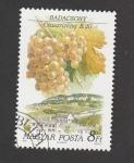 Stamps Europe - Hungary -  Racimo de uva variedad Olavzrisling