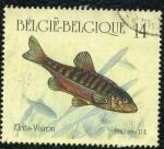 Sellos de Europa - Bélgica -  pez