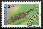 de Europa - Bulgaria -  Insectos - Raphidia notata