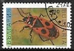 de Europa - Bulgaria -  Insectos - Pyrrhocoris apterus