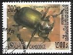 de Asia - Camboya -  Insectos - Calosoma sycophanta