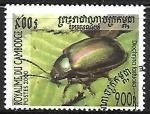 de Asia - Camboya -  Insectos -  Diochrysa fastuosa