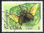 de America - Cuba -  Insectos -Megasoma elephas