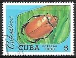 de America - Cuba -  Insectos - Heterosternus oberthuri)