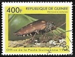 de Africa - Guinea -  Insectos - Sternocera castanea