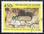 de Africa - Guinea -  Insectos - Meloe proscarabaeus)