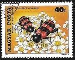 de Europa - Hungría -  Insectos - Common Yarrow