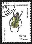 de Africa - Madagascar -  Insectos - dynastes tityus
