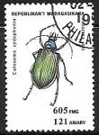 de Africa - Madagascar -  Insectos - Calosoma sycophanta