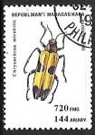 de Africa - Madagascar -  Insectos - Chrysoroa mirabillis