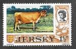 Sellos de Europa - Reino Unido -  36 - Vaca de Jersey (JERSEY)