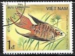 Stamps Asia - Vietnam -  Peces - Macropodus opercularis
